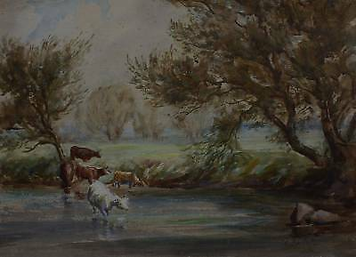 Cattle Drinking In A River Rupert Butler W/col C1925