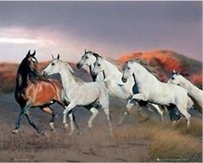 Animals ~ Horses At Dusk Poster