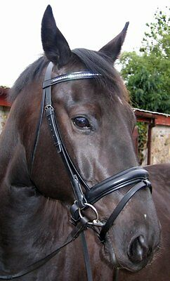 FSS STELLAR Curve CRYSTAL PIPING EDGE Rolled German WHITE Comfort PATENT Bridle