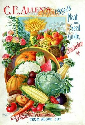 Dreers Vintage Seed Cover Picture Art Print Poster A4 A3 A2 A1