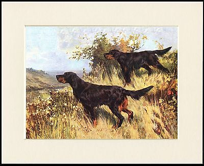 Gordon Setter Dogs At Work Lovely Dog Print Mounted Ready To Frame