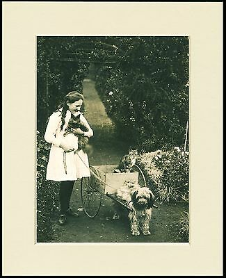 Tibetan Terrier Girl Cats Dog Cart Lovely Photo Print Mounted Ready To Frame