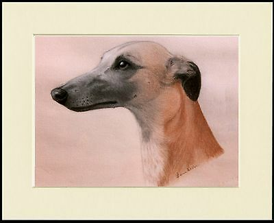 Whippet Charming Dog Head Study Print Mounted Ready To Frame