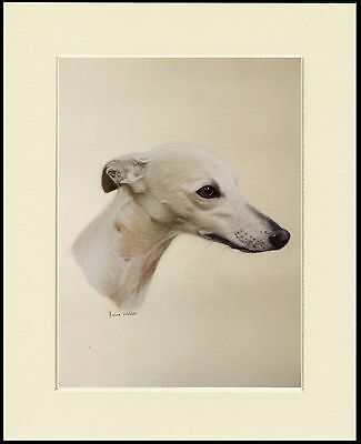 Whippet Head Study Dog Print Mounted Ready To Frame