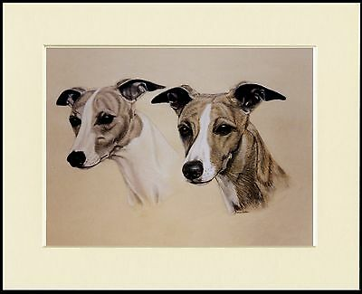 Whippet Two Dogs Head Study Lovely Dog Print Mounted Ready To Frame