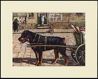 Rottweiler And Butchers Dog Cart Lovely Print Mounted Ready To Frame