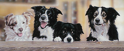 BORDER COLLIE WORKING SHEEPDOG DOG FINE ART LIMITED EDITION PRINT by Paul Doyle