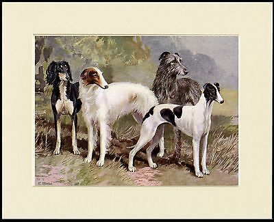 Saluki Borzoi Greyhound Irish Wolfhound Sight Hound Dog Print Ready To Frame