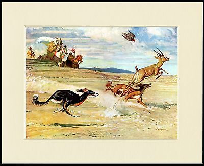 Saluki Dogs Hunting Scene Lovely Dog Print Mounted Ready To Frame