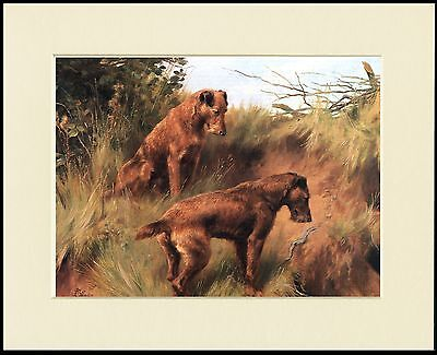 Irish Terrier Two Dogs Lovely Dog Print Mounted Ready To Frame