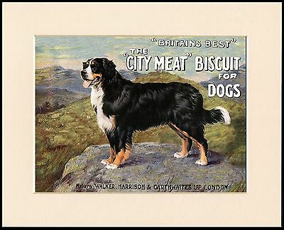 Bernese Mountain Dog Great Dog Food Print Mounted Ready To Frame