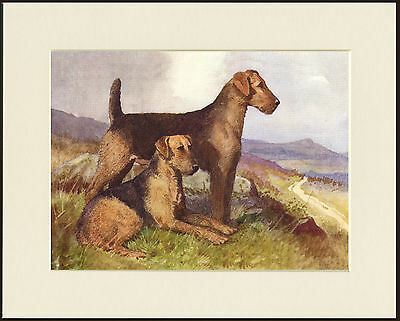 Airedale Terrier Two Dogs Lovely Dog Print Mounted Ready To Frame