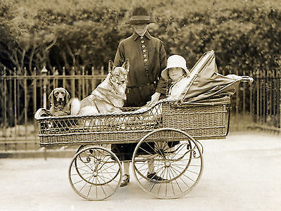 Elkhound Dachsund Child In Vintage Baby Carriage Dog Photo Print Ready To Frame