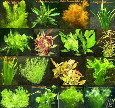 200 Plantes d'aquarium rouges / vertes, 30 bouquets, fr