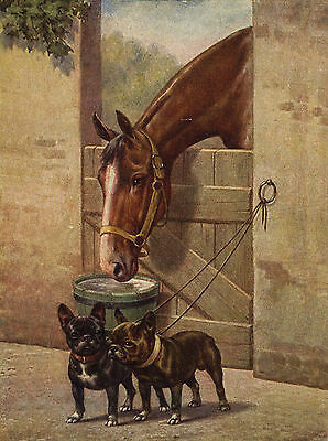 French Bulldog Dogs And Horse Lovely Dog Greetings Note Card