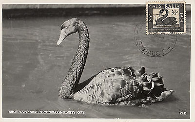 Australia Swan Valentines postcard with stamp postmarked 1958 Croydon North NSW