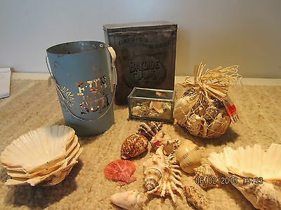 Decorative Nautical Large Seashell Collection