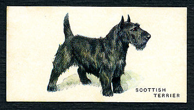 SCOTTISH TERRIER RARE WESTON'S BISCUITS AUSTRALIAN ISSUE DOG TRADE CARD