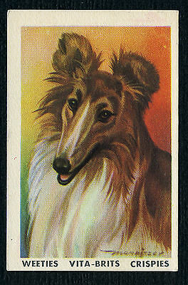 ROUGH COLLIE POPULAR PETS AUSTRALIAN DOG TRADE CARD FROM 1962