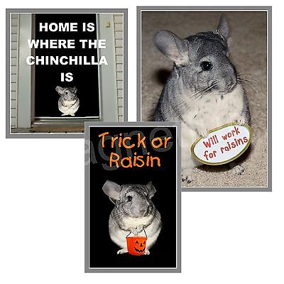 Chinchilla Magnet Lot of 3 Diff Chinchilla Pictures Home Work & Halloween