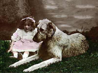Irish Wolfhound Charming Dog Greetings Note Card Beautiful Little Girl With Dog