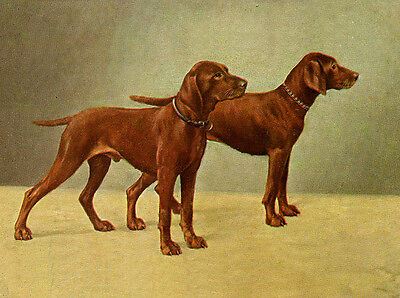 Hungarian Vizsla Charming Dog Greetings Note Card Two Beautiful Standing Dogs