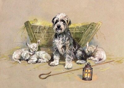 Bearded Collie And Lambs Lovely Dog Greetings Note Card