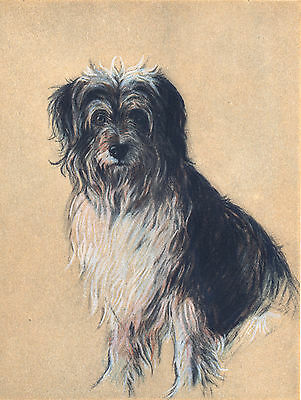 Bearded Collie Lovely Dog Art Greetings Note Card