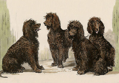 Irish Water Spaniel Charming Dog Greetings Note Card Beautiful Group Of Dogs
