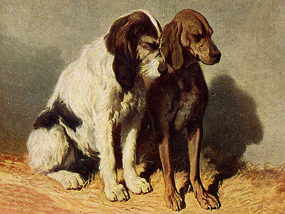 Italian Spinone And Segugio Italiano Lovely Dog Greetings Note Card Two Dogs