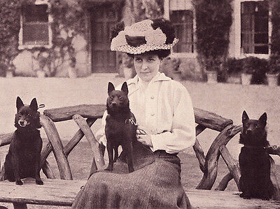 Schipperke Charming Dog Greetings Note Card Lady Sits With Three Dogs