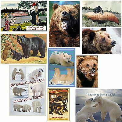 Bear Picture Refrigerator Fridge Magnet Pick Your Fave Grizzly Brown Black Polar