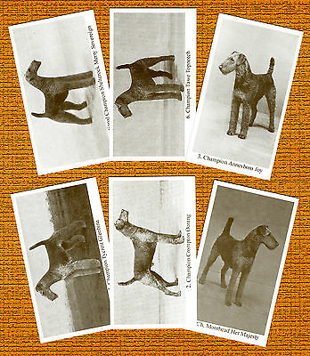 AIREDALE TERRIER Set 2 Named 6 Dog Photo Trade Cards