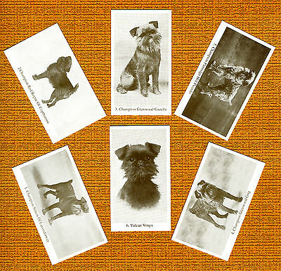 BRUSSELS GRIFFON  Named Set Of 6 Dog Photo Trade Cards