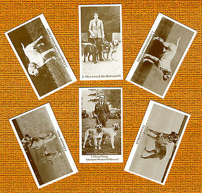 Bullmastiff Named Set Of 6 Dog Trade Cards Bull Mastiff