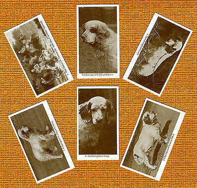 Clumber Spaniel Named Set Of 6 Dog Photo Trade Cards