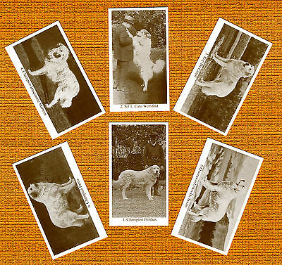 Great Pyrenees Pyrenean Mountain Dog Named Trade Cards