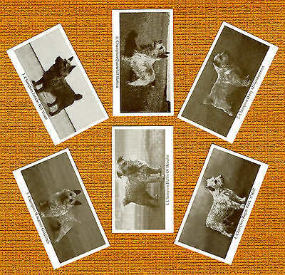 NORWICH TERRIER Named Set Of 6 Dog Photo Trade Cards