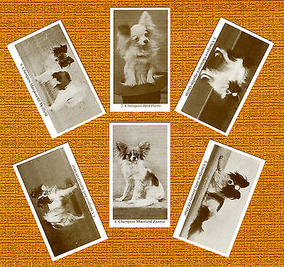 Papillon Named Set Of 6 Dog Photo Trade Cards