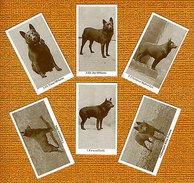 Schipperke Named Set Of 6 Dog Photo Trade Cards