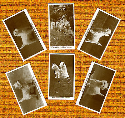 Westie West Highland White Terrier 6 Named Dog Cards