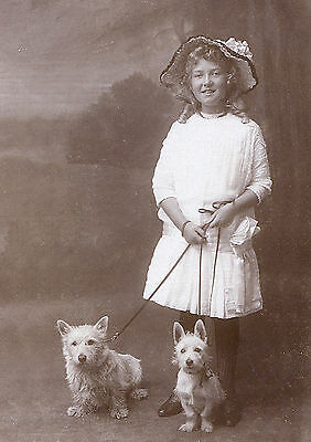 Westie Terrier Little Girl And Dogs Lovely Image Dog Photo Greetings Note Card