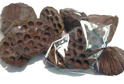 10 x SMALL SIZED DRIED LOTUS SEED PODS CHRISTMAS WREATH DECORATIONS
