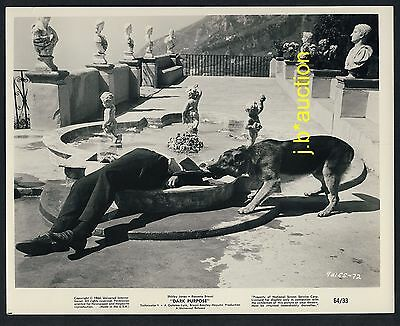 US Film DARK PURPOSE German Shepherd in Action / Schäferhund * Kino Photo 1964