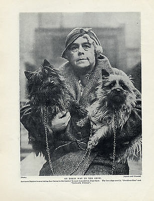 Cairn Terrier Baroness And Her Dogs Great Original Dog Print Page From 1934