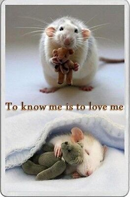 white rat clutching a teddy bear FRIDGE MAGNET fun TO KNOW ME IS TO LOVE ME