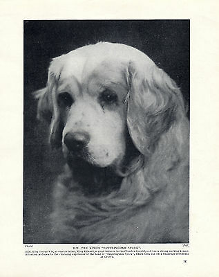 Clumber Spaniel Head Study The Kings Dog Old Original Dog Print Page From 1934