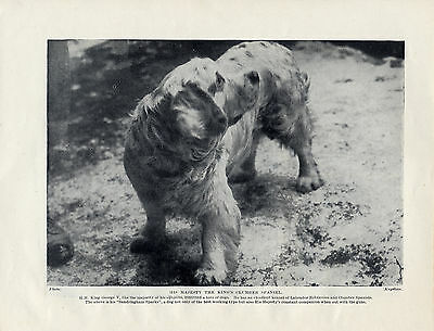 Clumber Spaniel Sandringham Spark The Kings Dog Original 1934 Print Page
