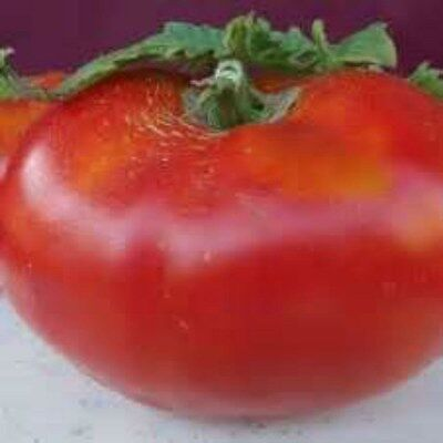 COMB S//H Australian Heart Heirloom Tomato WE SELL OVER 80 TYPES OF TOMATOES!