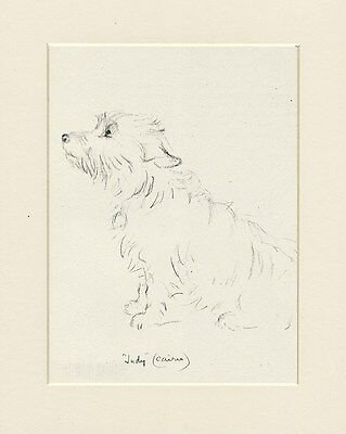 CAIRN TERRIER LOVELY 1946 DOG PRINT by MAC LUCY DAWSON MOUNTED READY TO FRAME